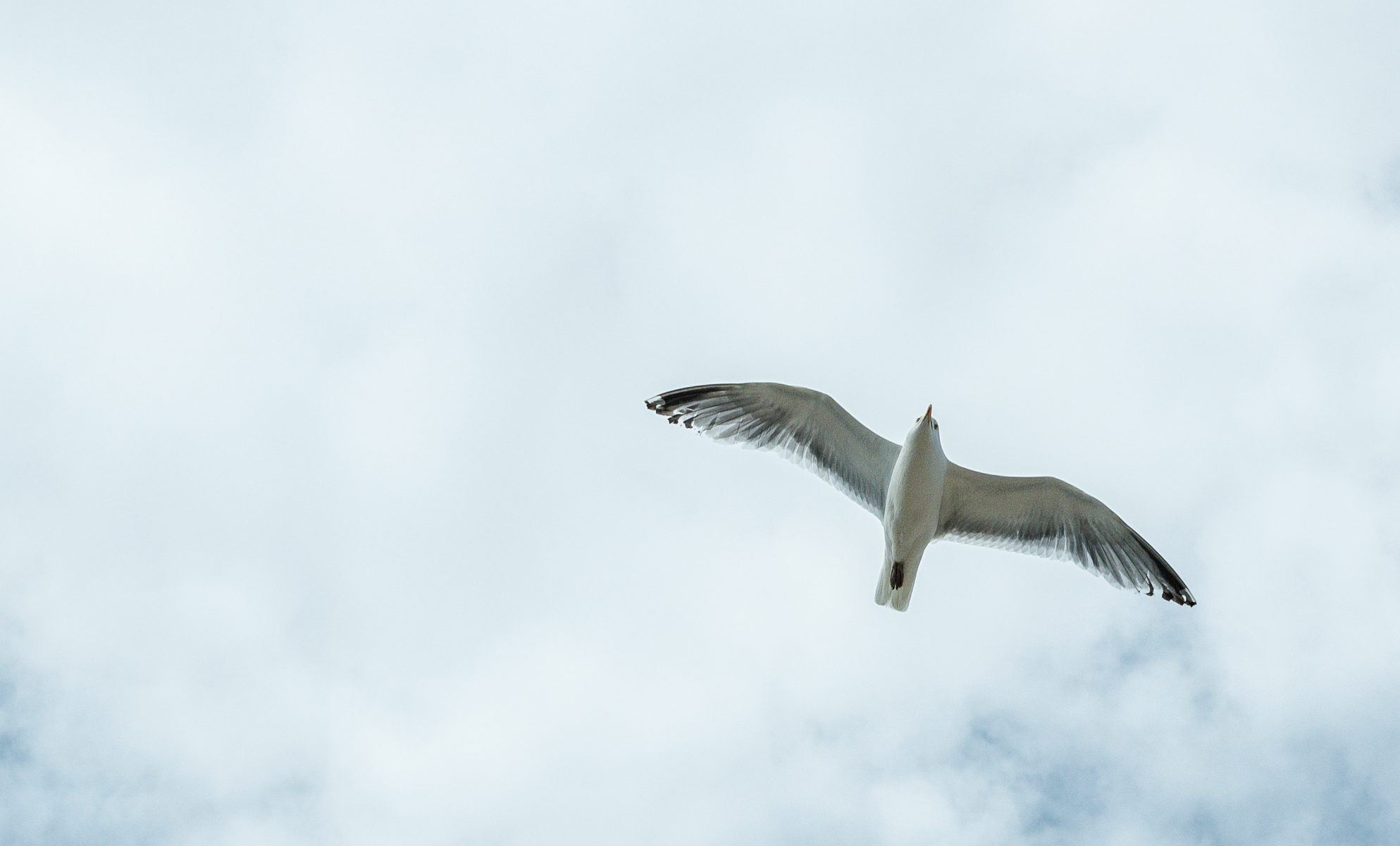 Bild einer fliegenden Möwe - Gesang zur Trauerfeier